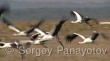 Video of White Stork